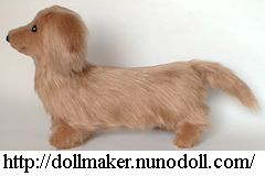 Long hair Dachshund